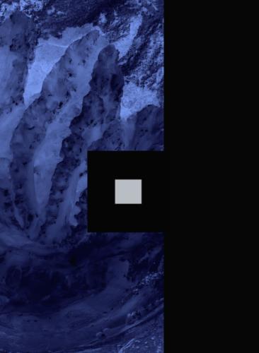 meduse bleue fond black